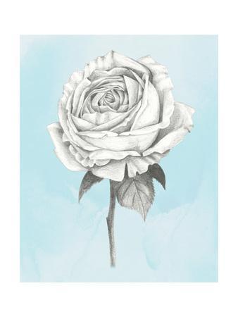 https://imgc.artprintimages.com/img/print/graphite-rose-iv_u-l-q11ahq30.jpg?p=0