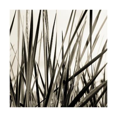 Grass and Reeds-Rica Belna-Photographic Print