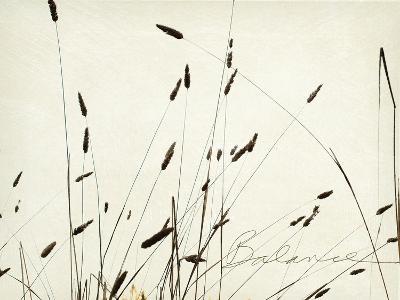 Grass Balance-Amy Melious-Premium Giclee Print