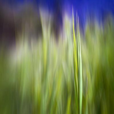 https://imgc.artprintimages.com/img/print/grass-blade_u-l-q1dbeb60.jpg?p=0