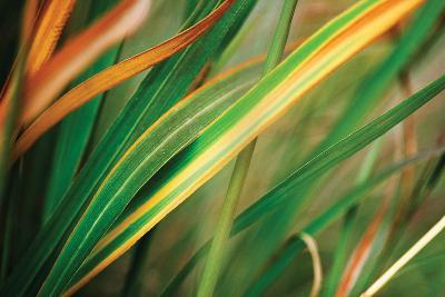 Grass in Fall I-Bob Stefko-Photographic Print