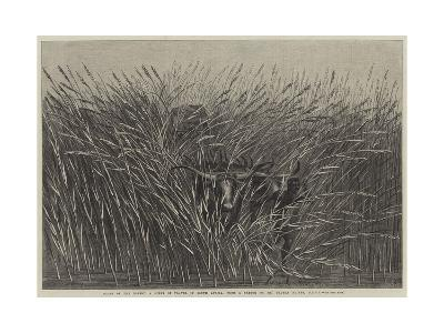 Grass of the Desert, a Scene of Travel in South Africa-Thomas Baines-Giclee Print