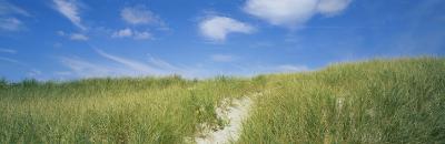 Grass on Sand Dunes, Cape Cod, Massachusetts, USA--Photographic Print