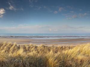 Grass on the Beach, Holme Dunes, Norfolk, England