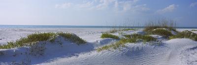 Grass on the Beach, Lido Beach, Lido Key, Sarasota, Florida, USA--Photographic Print