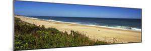 Grass on the Beach, Montauk Point, Montauk, Suffolk County, New York State, Usa