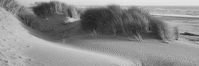 Grass on the Beach, Pacific Ocean, Bandon State Natural Area, Bandon, Oregon, USA--Photographic Print