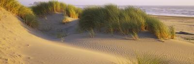 Grass on the Beach, Pacific Ocean, Boardman State Park, Oregon, USA--Photographic Print