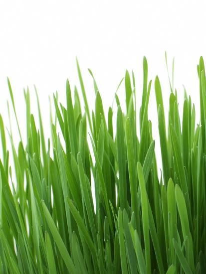 Grass-Grab My Art-Art Print