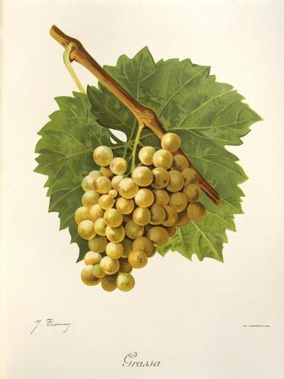 Grassa Grape-J. Troncy-Giclee Print