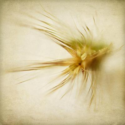 Grasses 2-Jessica Rogers-Giclee Print