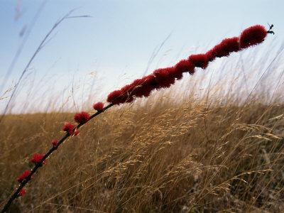 https://imgc.artprintimages.com/img/print/grasses-and-wildflowers_u-l-p3jfnz0.jpg?p=0