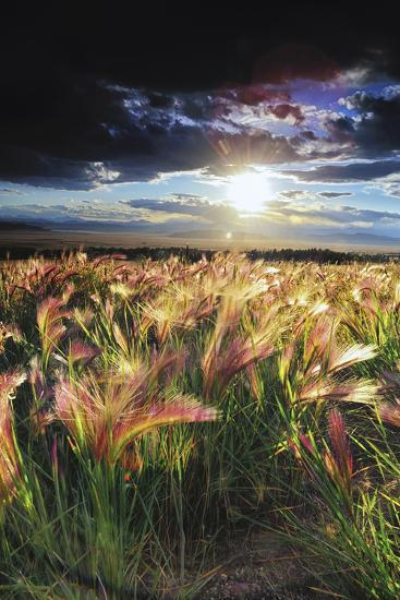 Grasses Blowing in the Wind, South Park, Colorado-Keith Ladzinski-Photographic Print