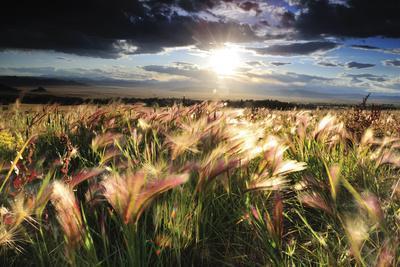 https://imgc.artprintimages.com/img/print/grasses-blowing-in-the-wind-south-park-colorado_u-l-pu6msy0.jpg?p=0