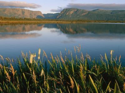 Grasses Grow Along the Edge of a Lake-Michael S^ Lewis-Photographic Print
