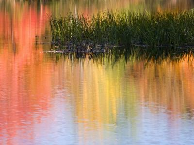 Grasses Growing in Water Reflecting, South Paris, Maine, USA-Wendy Kaveney-Photographic Print