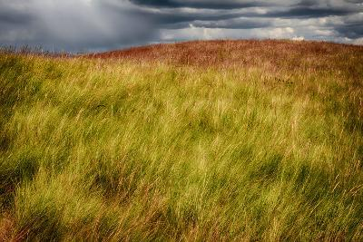 Grasses on a Stormy Day-Ursula Abresch-Photographic Print