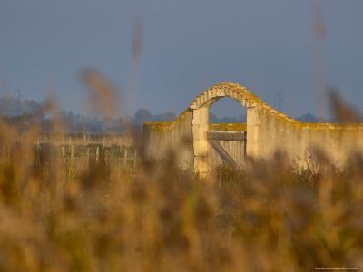 Grasses surrounding Corral Bullring, Camargue, France-Lisa S^ Engelbrecht-Photographic Print