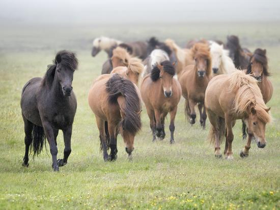 Grassland Horses II-PHBurchett-Photographic Print