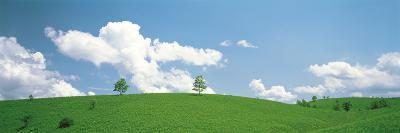 Grassland with Blue Sky and Clouds--Photographic Print
