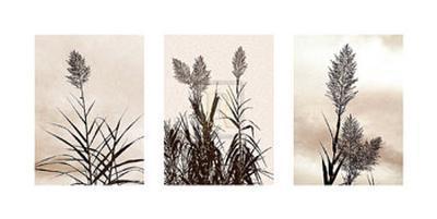 Grasslands-Jon Hart Gardey-Art Print