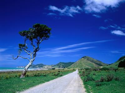 Gravel Road Linking Te Araroa to East Cape, Gisborne, New Zealand-Barnett Ross-Photographic Print