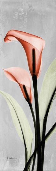 Gray Calla Lily 2-Albert Koetsier-Premium Giclee Print