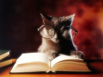 Gray Cat With Glasses Reading A Book-gila-Photographic Print