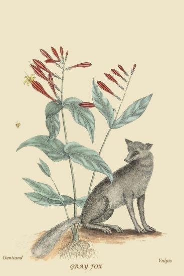 Gray Fox-Mark Catesby-Art Print