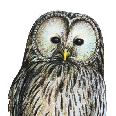 Gray Owl Portrait Drawing- viktoriya_art-Art Print