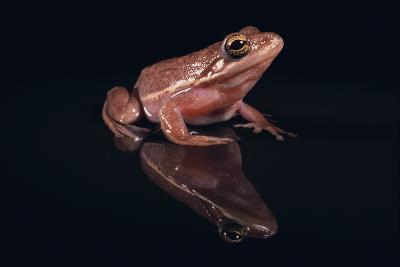 Gray Tree Frog-DLILLC-Photographic Print