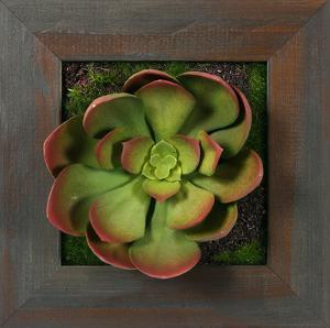 Grayson Pink Green Echeveria Square