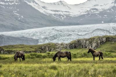 https://imgc.artprintimages.com/img/print/grazing-at-the-glacier_u-l-q1bn1ue0.jpg?p=0