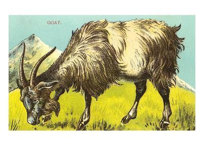 Grazing Goat--Art Print