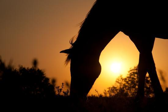 Grazing Horse Silhouette Against Rising Sun In Rich Tone-Sari ONeal-Photographic Print