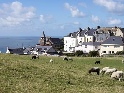 Grazing Sheep, Mortehoe, Devon, England, United Kingdom, Europe-Jeremy Lightfoot-Photographic Print