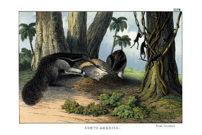 Great Anteater, 1860--Giclee Print