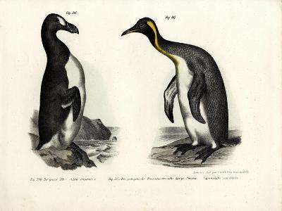 Great Auk, 1864--Giclee Print