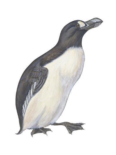 Great Auk (Pinguinnus Impennis), Birds-Encyclopaedia Britannica-Art Print