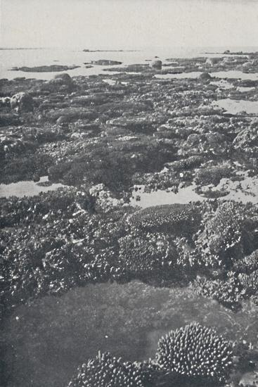 'Great Barrier Reef', 1924-Unknown-Photographic Print