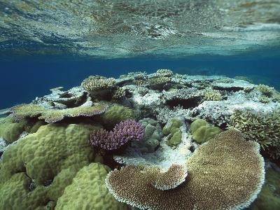 Great Barrier Reef Near Port Douglas, Queensland, Australia-Flip Nicklin/Minden Pictures-Photographic Print