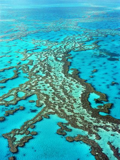Great Barrier Reef, Queensland, Australia-Peter Walton-Photographic Print