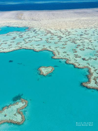 Great Barrier Reef--Art Print