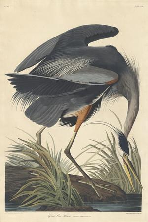 https://imgc.artprintimages.com/img/print/great-blue-heron-1834_u-l-q1byh230.jpg?p=0