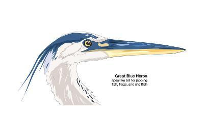 Great Blue Heron (Ardea Herodias), Birds-Encyclopaedia Britannica-Art Print