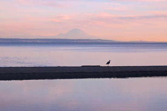 Great Blue Heron, Ardea Herodias, Near Mount Rainier in Seattle-Donna O'Meara-Photographic Print