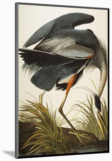 Great Blue Heron (Ardea Herodias), Plate Ccxi, from 'The Birds of America'-John James Audubon-Mounted Premium Giclee Print