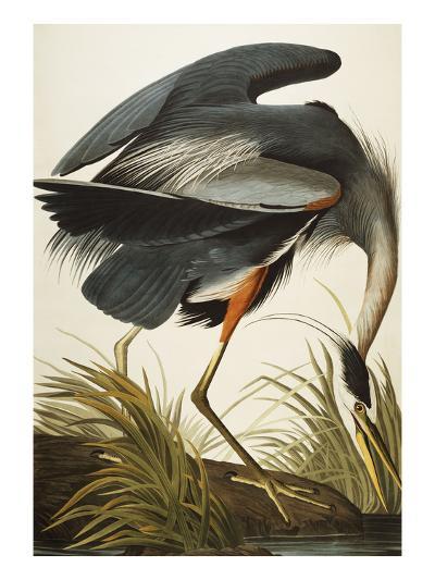 Great Blue Heron (Ardea Herodias), Plate Ccxi, from 'The Birds of America'-John James Audubon-Giclee Print