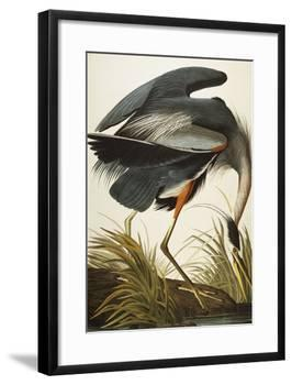 Great Blue Heron (Ardea Herodias), Plate Ccxi, from 'The Birds of America'-John James Audubon-Framed Giclee Print