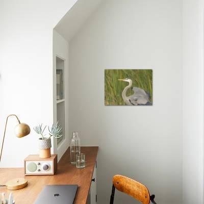 Great blue heron in breeding plumage, Blue Heron Wetlands, Florida, USA  Photographic Print by Maresa Pryor | Art com